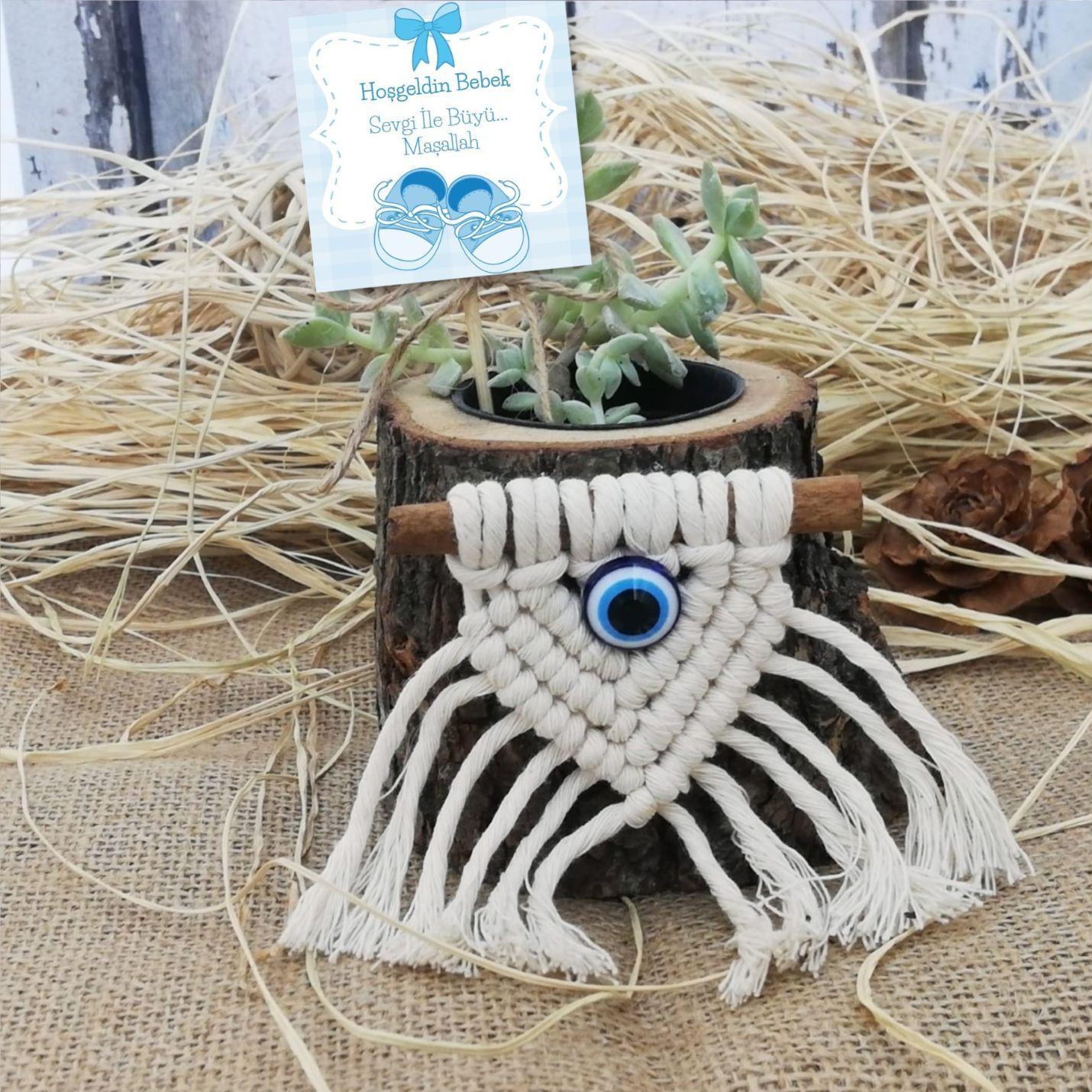Hoşgeldin Bebek Naturel Saksıda Sukulent - Mavi