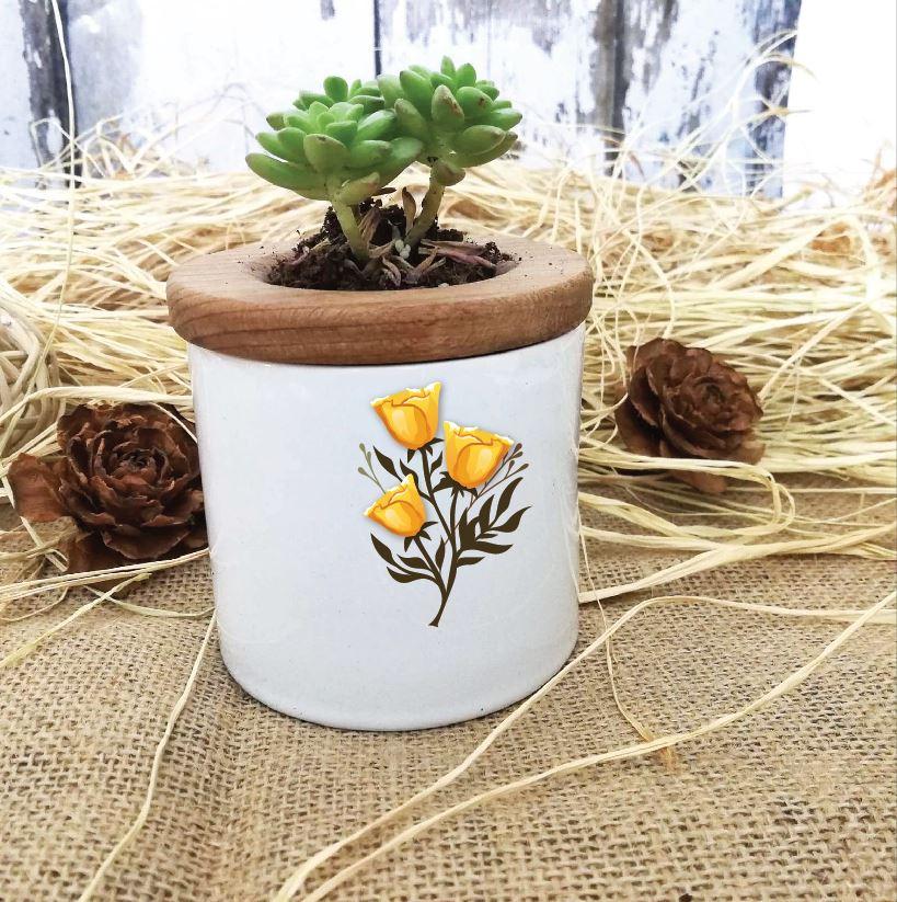 Çiçek Tasarımlı Özel Saksıda Canlı Sukulent -20