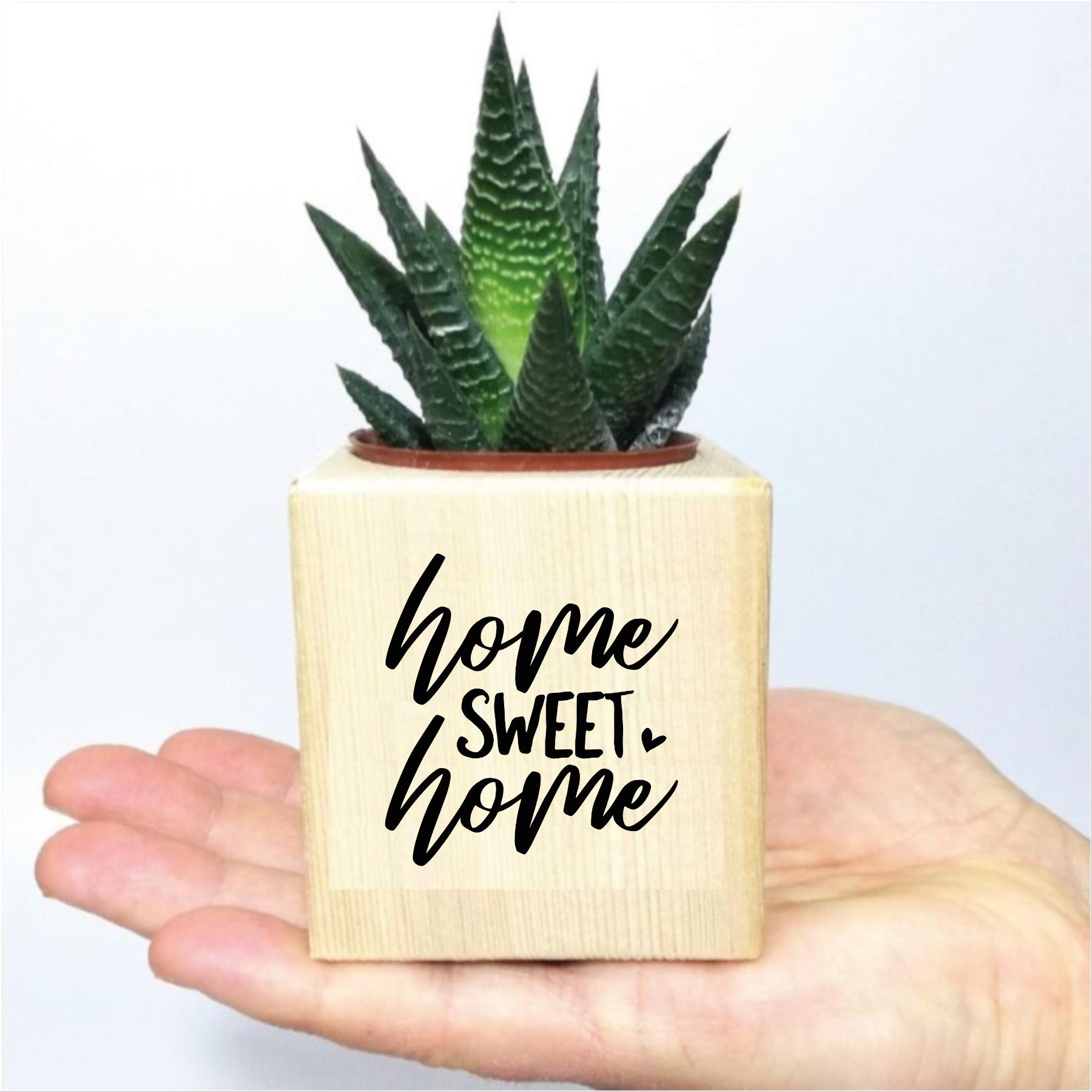 Home Sweet Home Temalı Özel Tasarımlı Ahşap Küp Saksıda Sukulent