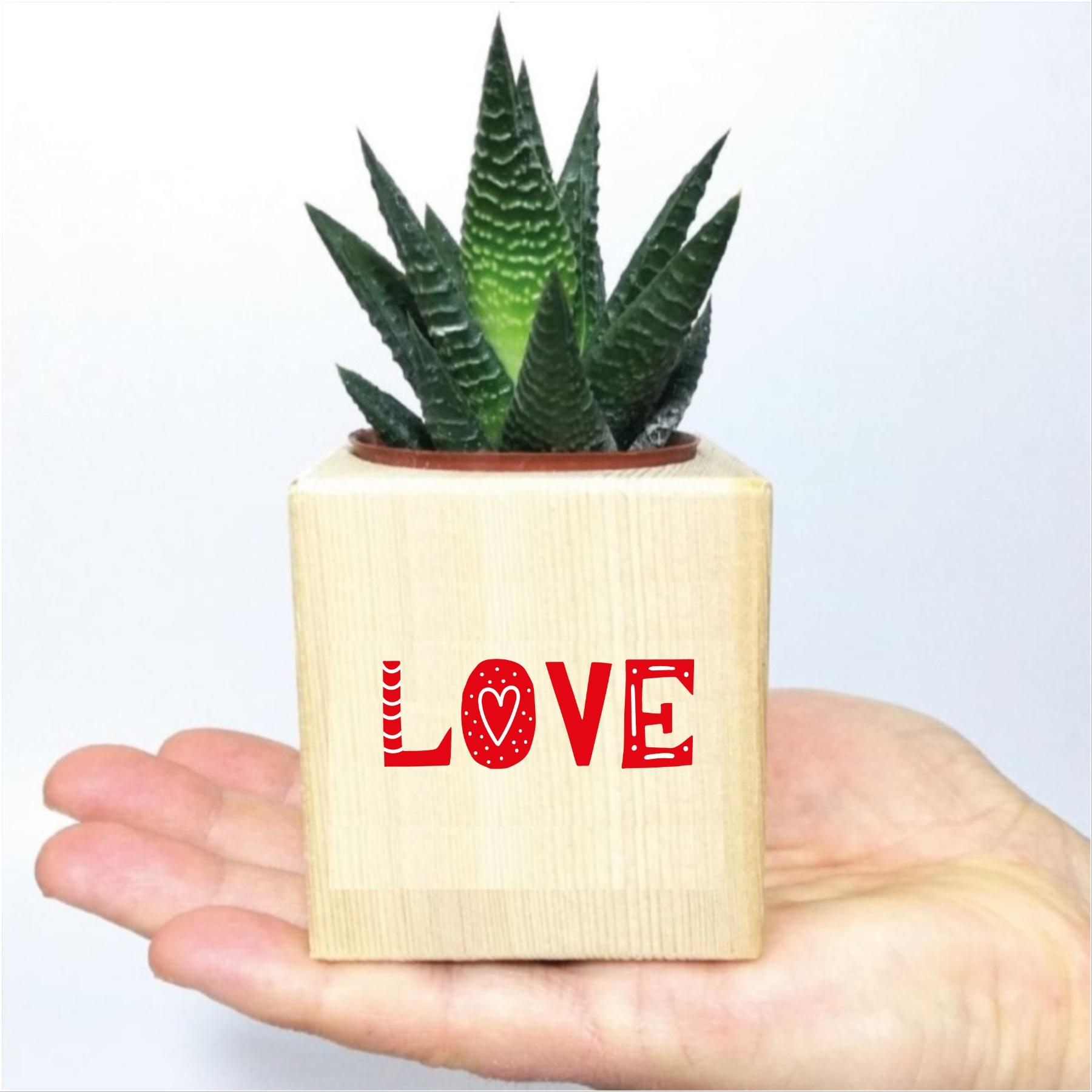 Love Tasarımlı Naturel Ahşap Küp Saksıda Hawortia