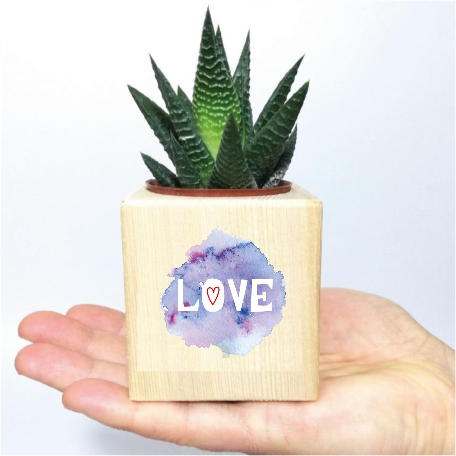 Romantik Love Tasarımlı Naturel Ahşap Küp Saksıda Hawortia