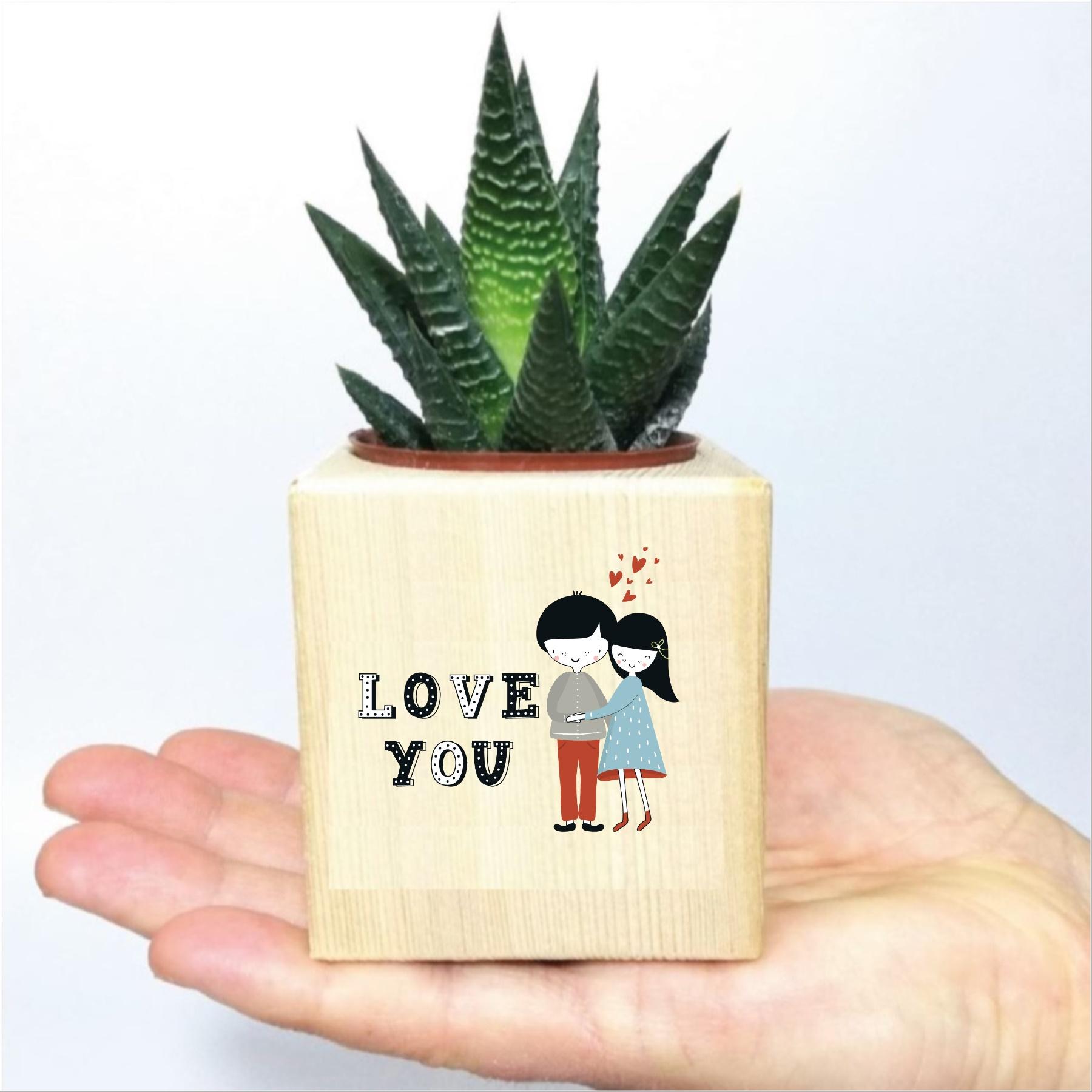 Sevgiliye Love You Temalı Ahşap Küp Saksıda Hawortia