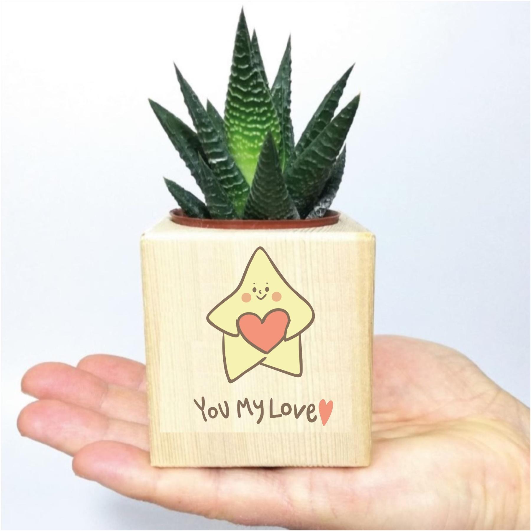 Sevgiliye You My Love Temalı Ahşap Küp Saksıda Hawortia